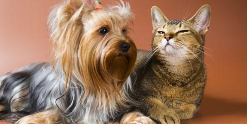 Doenças renais em cães e gatos - os sintomas e o tratamento