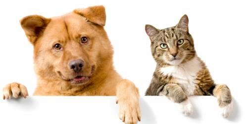 Conheça as doenças cardíacas mais comuns entre cães e gatos