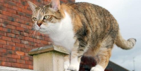 Gatos com problemas articulares: os cuidados necessários