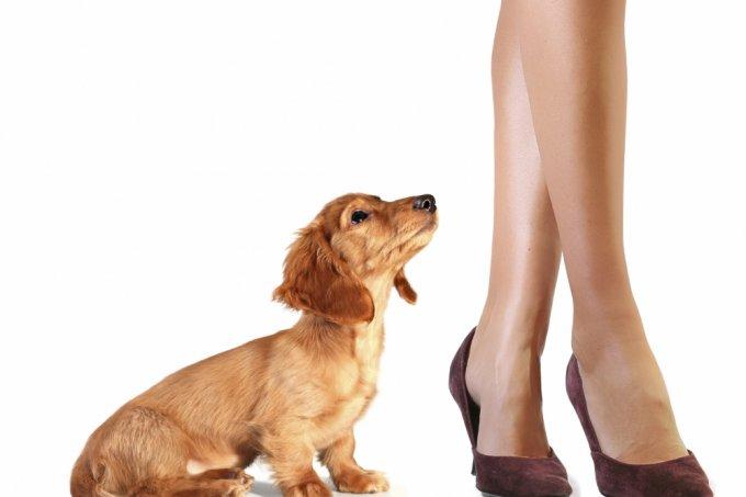 Cachorro e visitas
