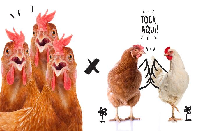 Procure intercalar a carne vermelha – mais rica em gordura – com o consumo de frango e peixe