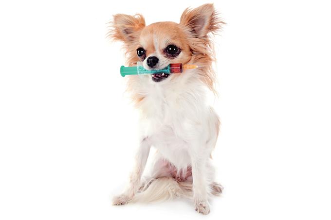 Novo tratamento contra leishmaniose visceral canina chega ao Brasil