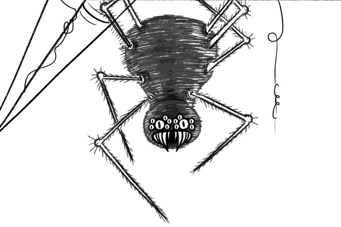 Veneno de aranha contra disfunção erétil