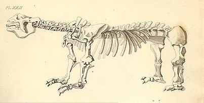 """Ilustração de um megatério, criatura gigantesca que viveu há 20 mil anos, feita por James Parkinson para seu livro """"Restos Orgânicos de um Mundo Antigo"""""""