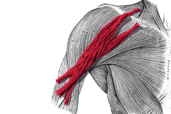 Como preservar a massa muscular