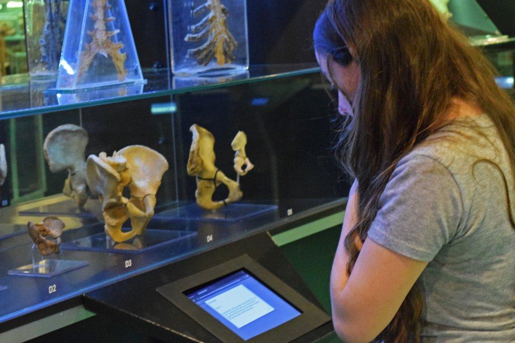 Visitante pesquisa nos tablets informações sobre as partes do corpo em exposição