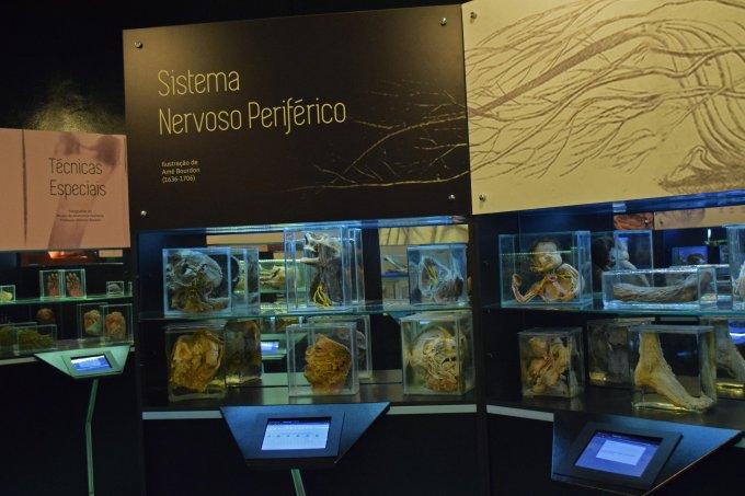 Museu de Anatomia Humana Alfonso Bovero