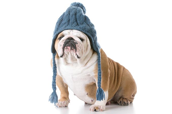 Cuidados com a pele dos cães no inverno