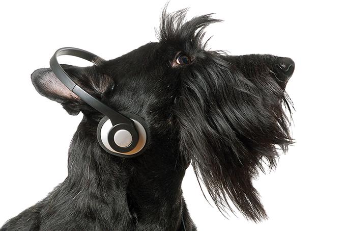 Musicoterapia para cachorros