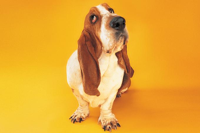 Sintomas do Alzheimer em cachorros
