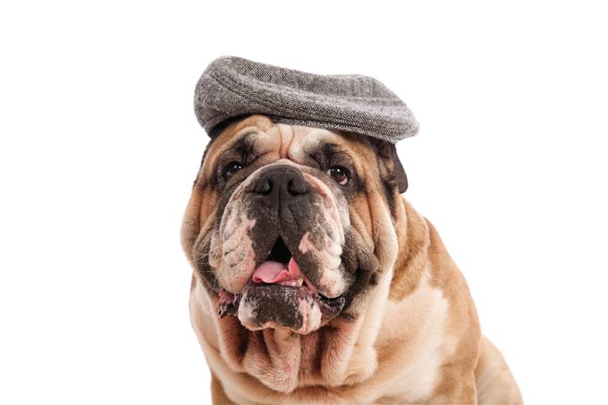 Pets idosos são menos adotados