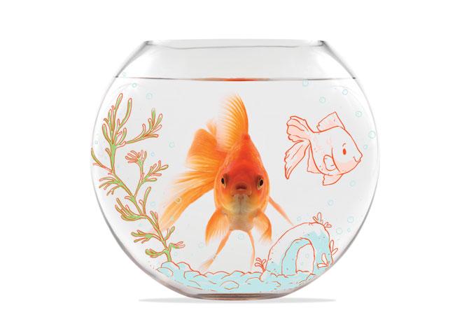Peixes também sofrem de depressão. Aprenda como prevenir
