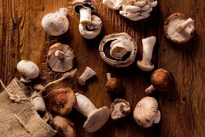 Cogumelos: como cultivar em casa