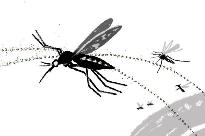 Repelente para mosquito da febre amarela