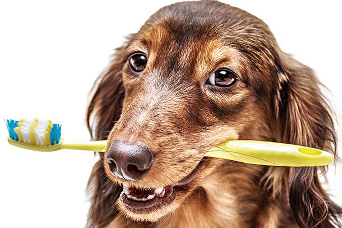 É preciso escovar os dentes do pet