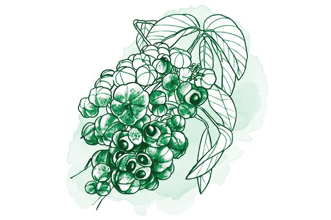 Combinação de plantas podem ajudar a combater tumores