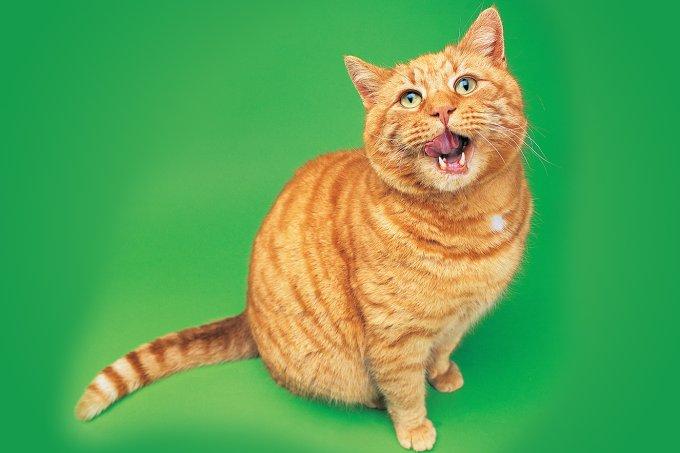 Produtos com feromônios para gatos