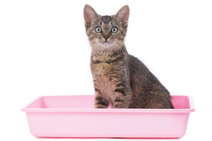 Descubra como cuidar de filhotes de gato