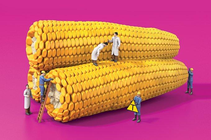 Alimentos geneticamente modificados fazem bem?