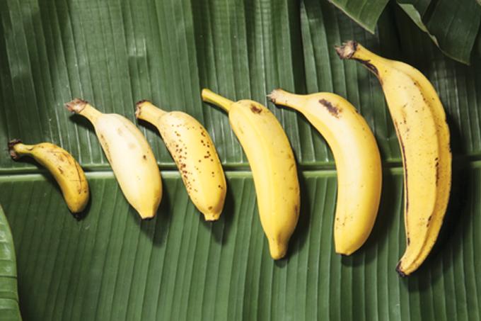 Saiba tudo sobre a fruta mais popular do nosso país