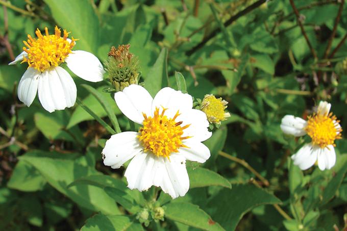 Saiba mais sobre as plantas medicinais e comestíveis do nosso país