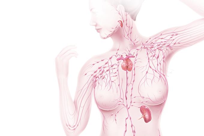 Resumo do sistema linfático