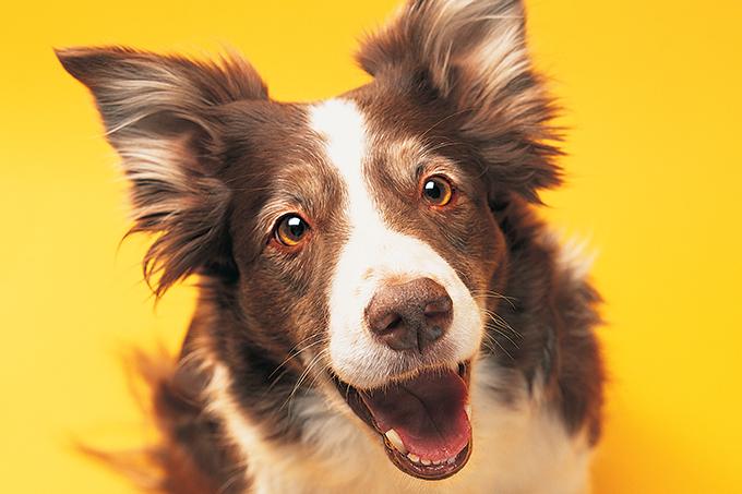 Como cuidar dos cachorros no verão