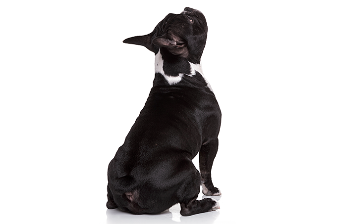 Farmacêutica desenvolve novo medicamento contra dermatite atópica em cães