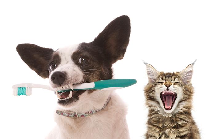 Ração protege dentes dos pets