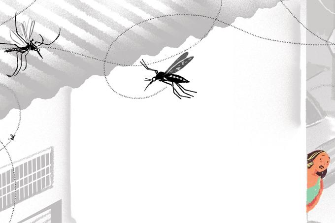 Dengue pode evitar transmissão de zika
