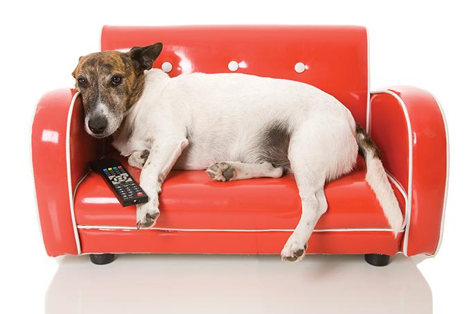Canal de TV para cães auxiliaria a amenizar ansiedade