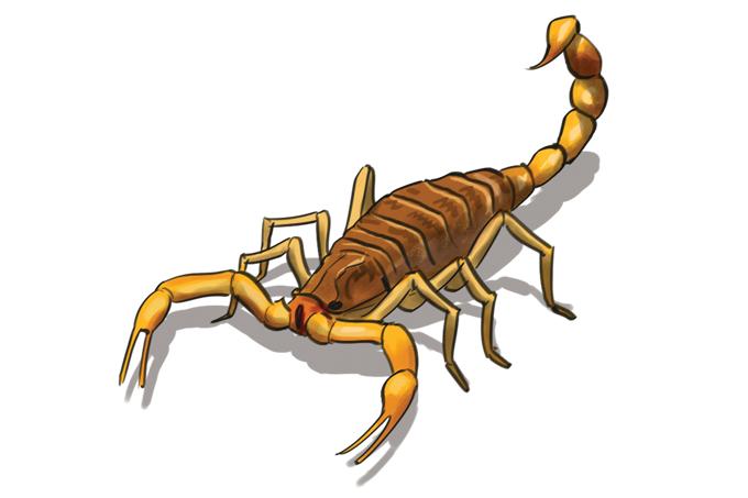 Como evitar acidentes com escorpião?