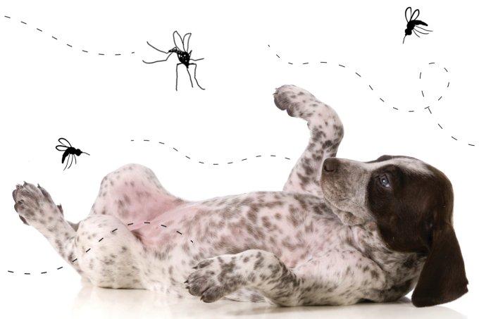 Doenças de insetos em animais