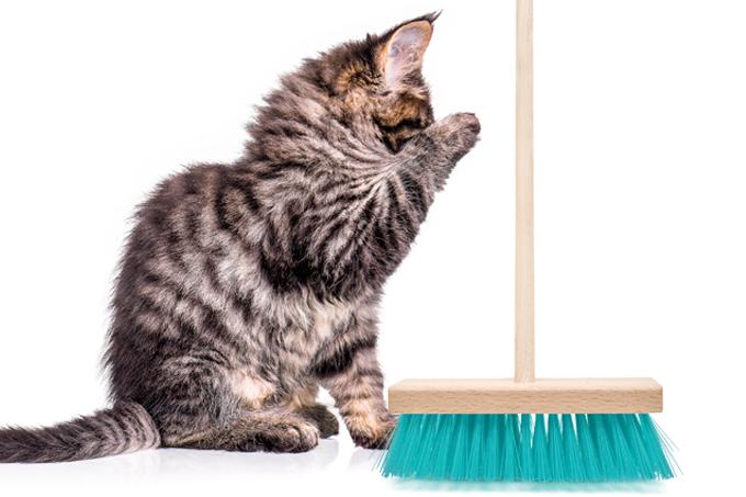 Como proteger a tireoide dos gatos?