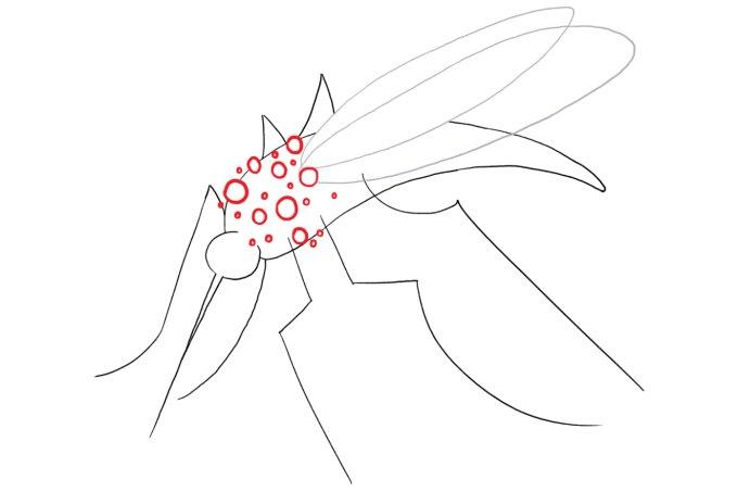 Sintomas e tratamento do novo vírus Mayaro