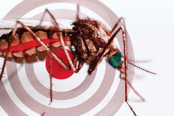 Novas formas de evitar febre amarela, dengue e afins