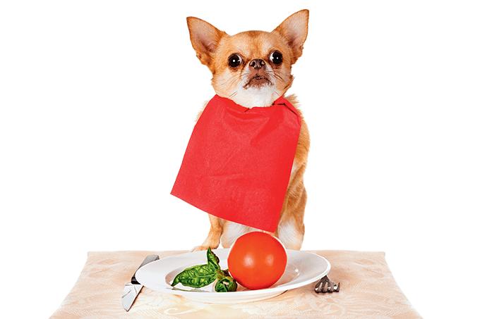 Veganismo para animais domésticos