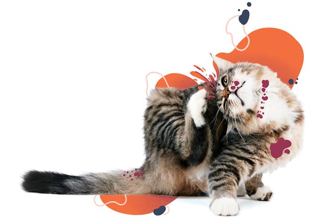 Sintomas e tratamento de alergia em animais?