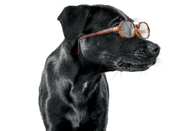 Doenças oculares em cães e gatos.