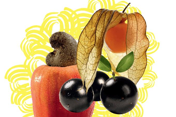 Plantas e frutos nativos são tema de livro