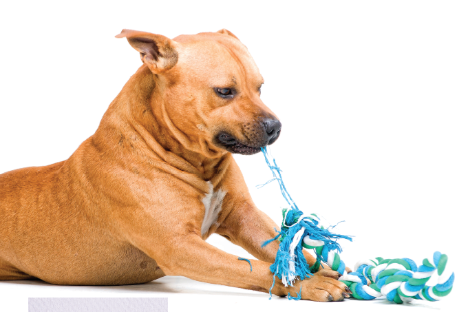O que causa estresse nos animais?