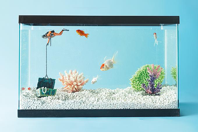 Como cuidar de peixes de estimação.