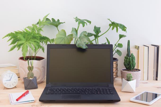 Plantas para reduzir o estresse no trabalho