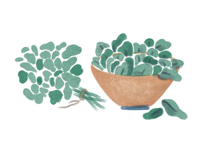 Truques vegetais