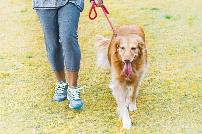 Exercício com cachorros