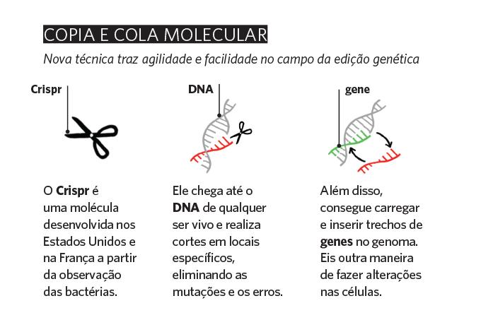 Genética - quadro