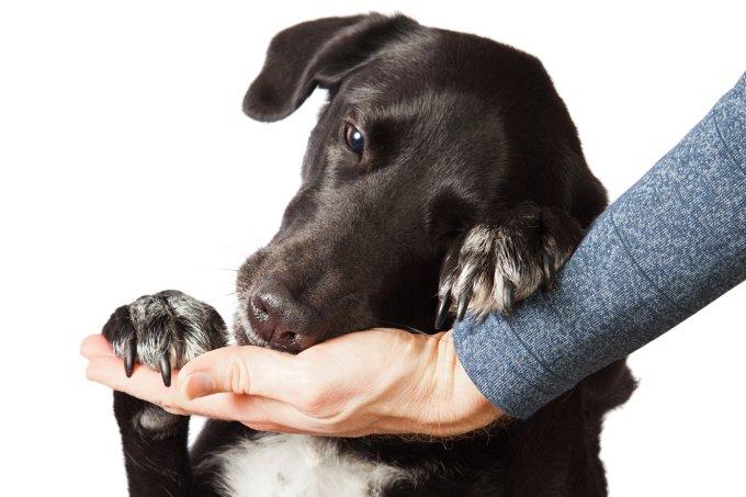 O que fazer com os animais no tempo de isolamento social