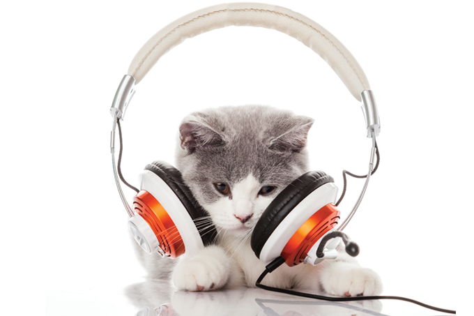 Playlists para animais.