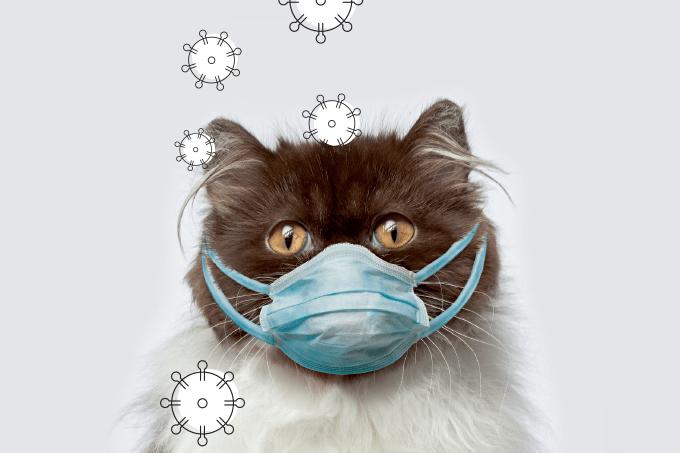 Mesmo que peguem o coronavírus, animais parecem não desenvolver a Covid-19