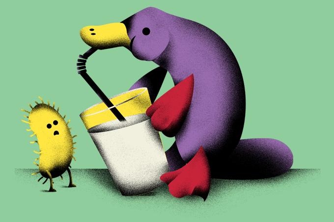 Futuro: Leite de ornitorrinco tem poder